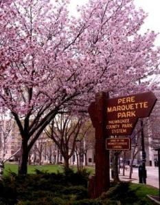 cherry-trees